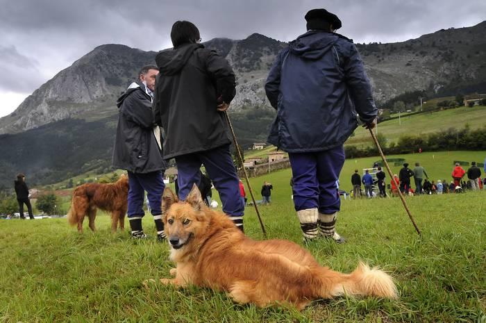 Garaik Euskal Herriko ardi txakurren txapelketa hartuko du irailaren 18an