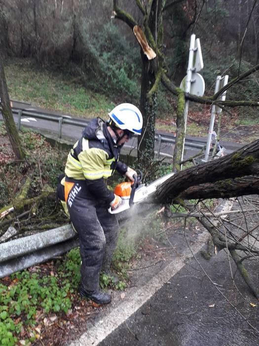 Denboralearen ondorioz Elorrion eta Durangon eroritako zuhaitzak erretiratu dituzte suhiltzaileek