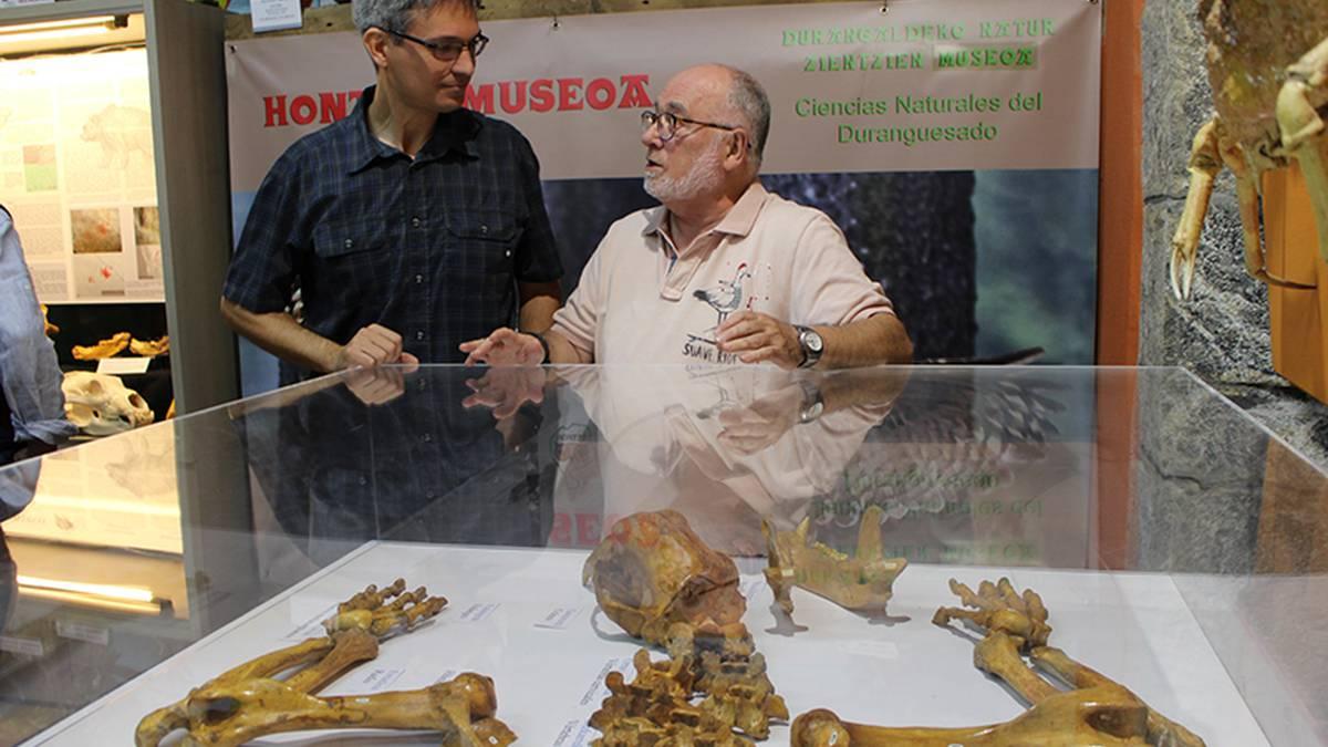 [ARGAZKIAK] Orain 25.000 urte desagertutako leize-hartzaren eskeletoa ikusgai dago Mañariko Hontza Museoan