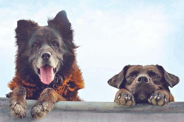 Los Reyes. Una Mirada Canina