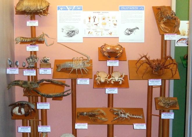 Karramarro bibolinjoleak edota eskorpioi itxurakoak, Mañariko Hontza museoan